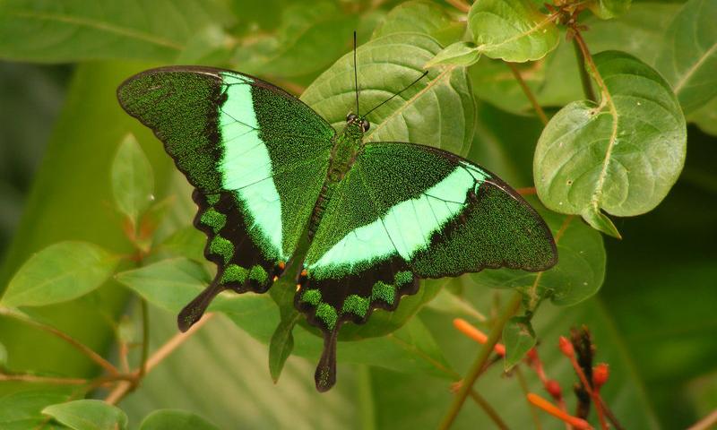 Ramadan Butterflies
